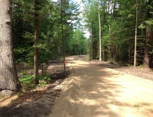 an under-construction trail through a pine forest