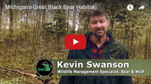 bear habitat video thumbnail