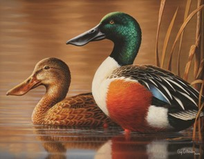 2017 Michigan duck stamp, featuring pair of northern shovelers