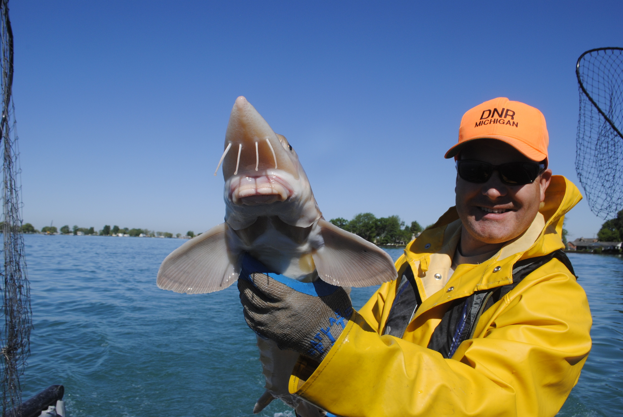 Michigan Department of Natural Resources fisheries assistant Jason Pauken Jason Pauken shows off a St. Clair River sturgeon.
