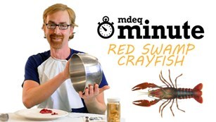 still image from video on identifying red swamp crayfish