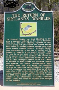close-up view of the green-and-gold Kirtland's warbler marker