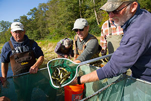 individuals harvesting a walleye pond for stocking