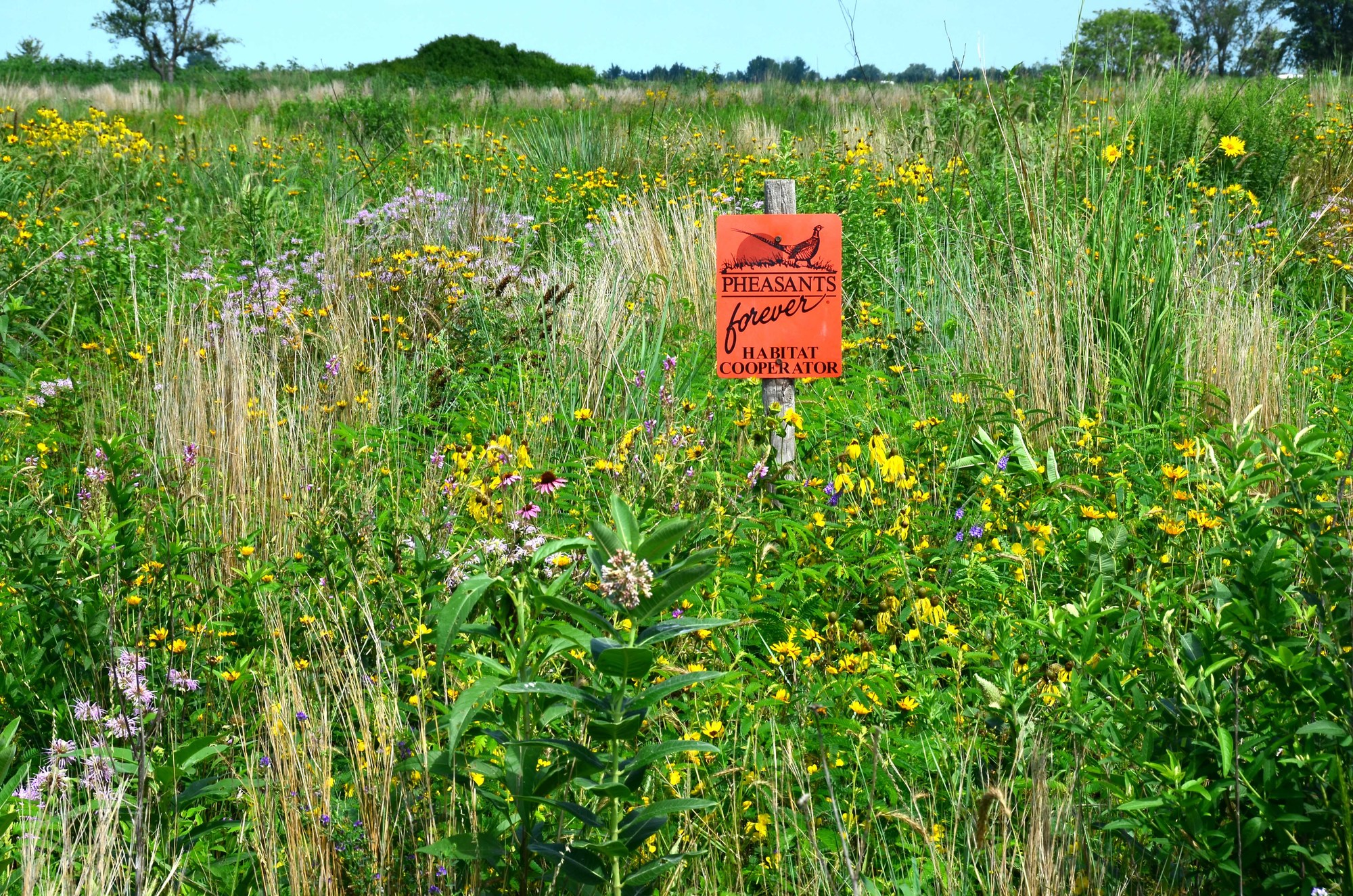 Grasslands are stunning when in full bloom in summertime (Photo by Pete Berthelsen).