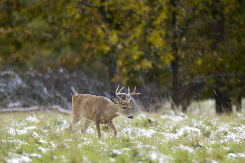 Hunters can use the Mi-HUNT program to study maps and photos to find out where the deer are.