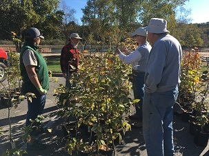 Volunteers plant disease-resistant beech trees at Ludington State Park.