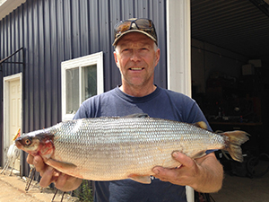 state record lake herring held by angler