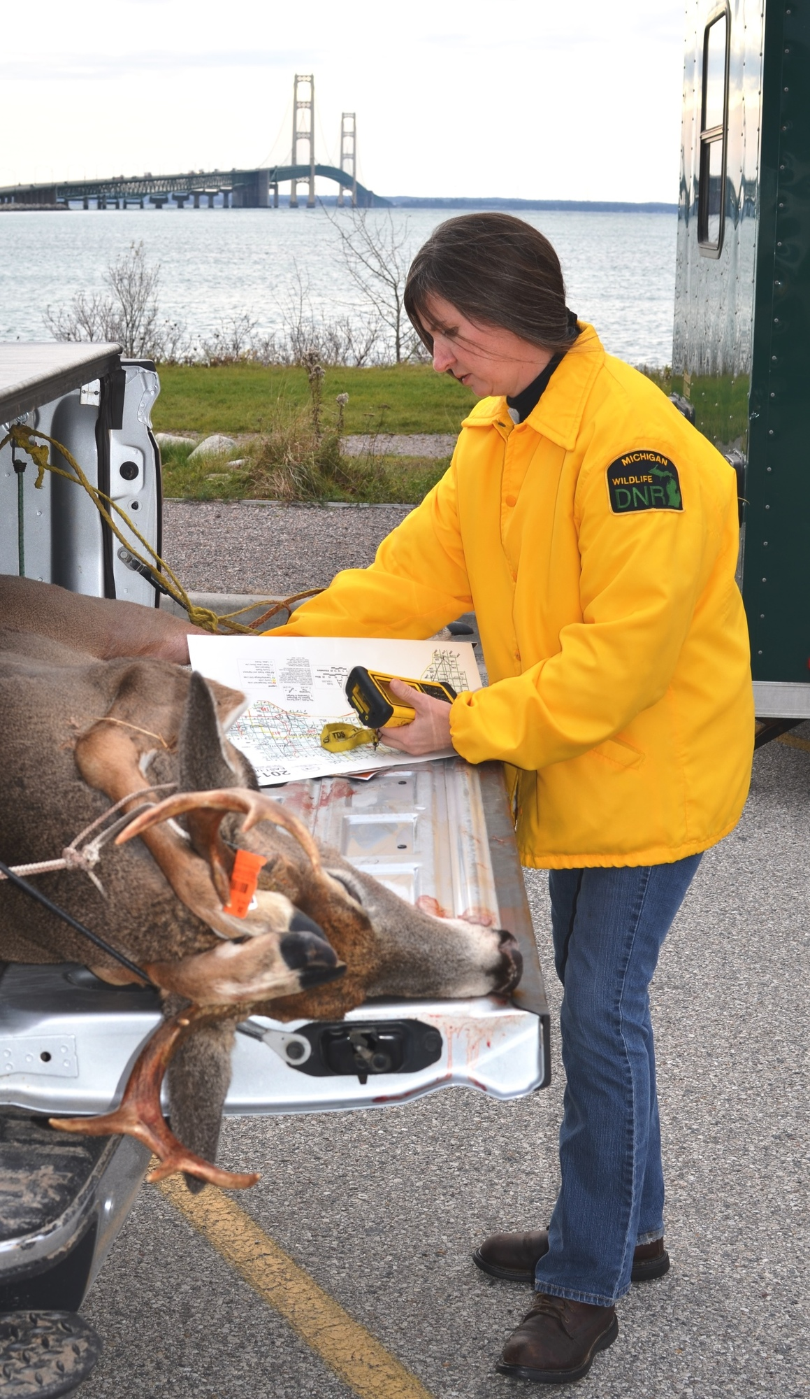 Sherry McKinnon, DNR wildlife ecologist from the Newberry office, checks in a buck at Bridge View Park in St. Ignace.