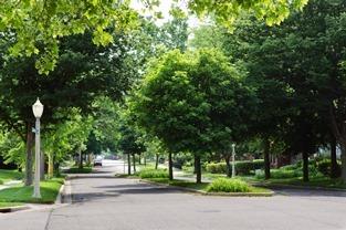 street view of a neighborhood boulevard, plenty of green trees