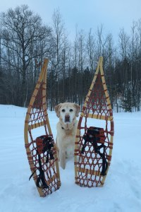 dog sitting in snowy field next to pair of snowshoes