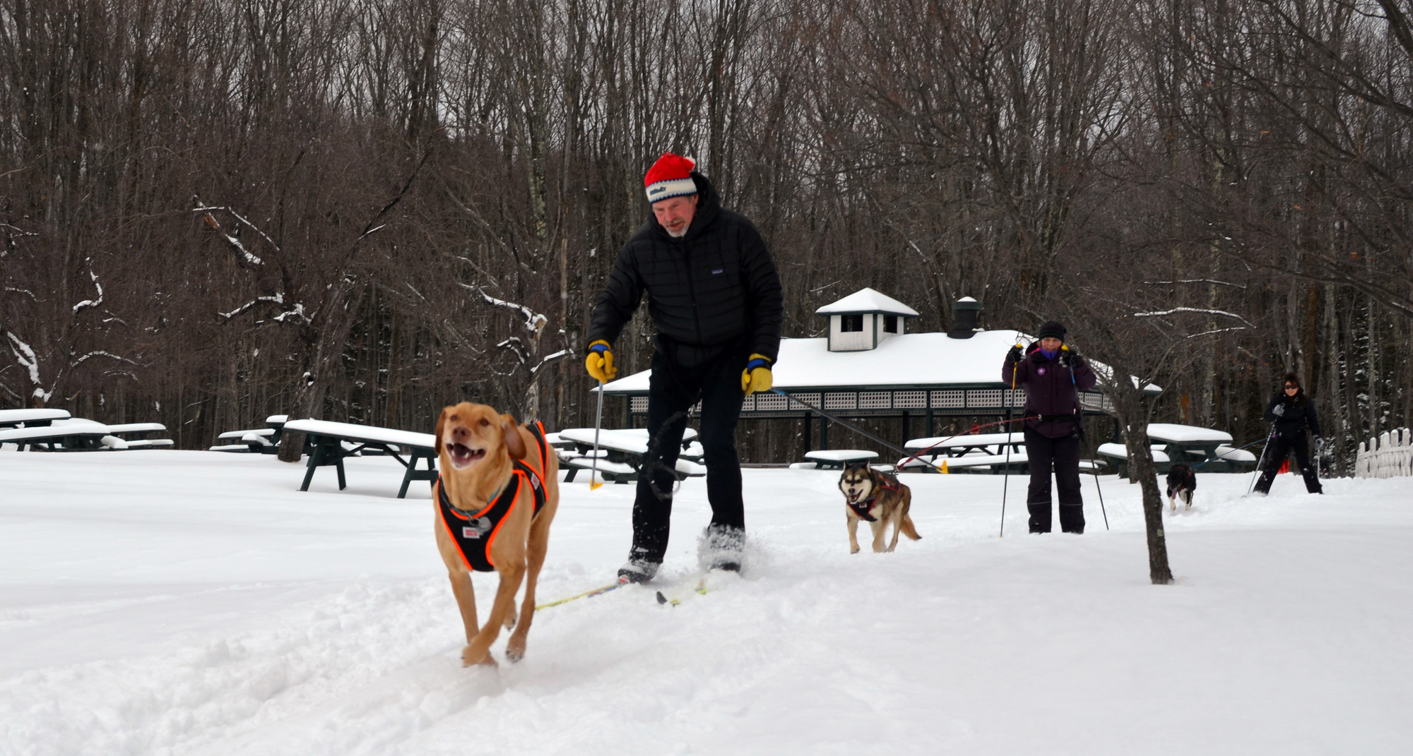 Skijoring at the Bay Cliff Health Camp in Marquette County.