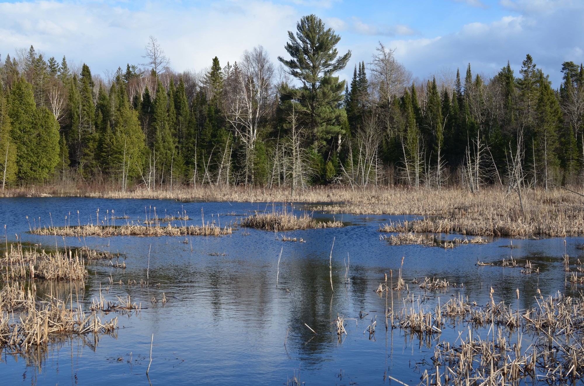 More than half of Michigan's wetlands, like this one, have been lost over the past two centuries.