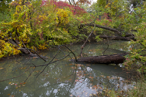 The balance of water is critical in Belle Isle's forest.