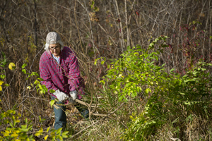 : Volunteers have turned out to help in Belle Isle's rare wet-mesic flatwood forest.