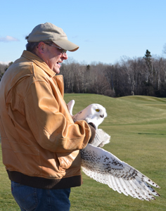 Bird rehabilitation expert Jerry Maynard gets ready to release a snowy owl in Marquette County.