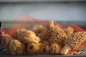 A mesh bag full of morel mushrooms is shown.