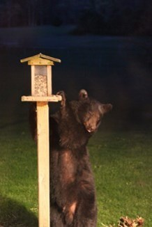 If you're getting ready to head up north, remember to remove all bear attractants – like bird feeders – from your property.