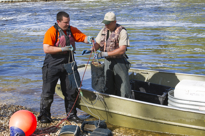 Sturgeon researchers working with egg mats on the Kalamazoo River below Allegan Dam.