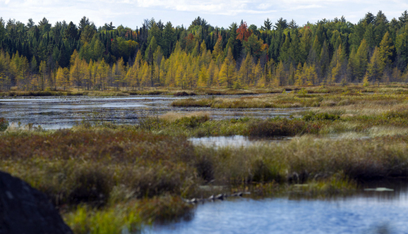 Wetland areas, like this one near Craig Lake State Park in Baraga County, serve numerous valuable functions.