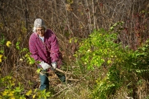volunteer clearing brush at state park