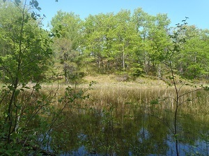 Several DNR-managed, forested land parcels go up for auction starting July 10