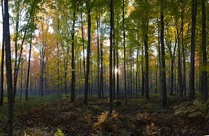 Residents are asked to be on the lookout for Michigan's largest trees in this year's Big Tree Hunt