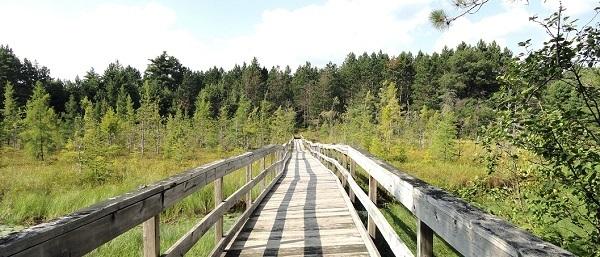 view down a footbridge