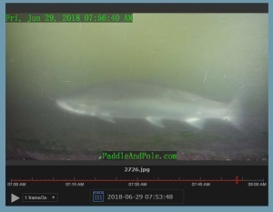 New webcam helps people all over follow fish movement through a southwest Michigan fish ladder