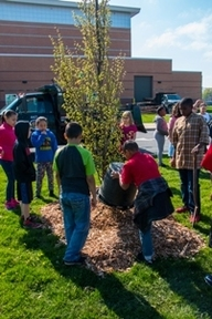 Volunteers plant trees in Livonia. Projects like this are funded through the DNR's Community and Urban Forestry grant program.