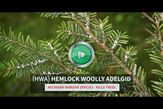 HWA video button
