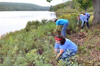 Volunteers clear brush along the edge of Lake Fanny Hooe at Fort Wilkins.