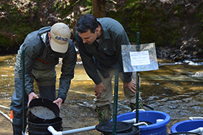 DNR staff in stream working with remote site incubators