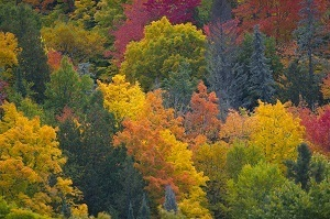 A scenic shot of striking fall colors in an Upper Peninsula forest