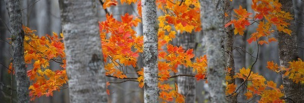 close-up of trees with colorful fall leaves