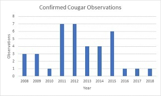 A graph shows the number of confirmed Michigan cougar reports in recent years.