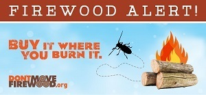 During Firewood Awareness Month in October, it's a good time to remember to buy local.