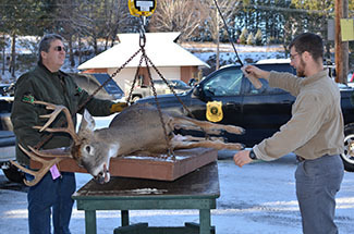 DNR staffers get ready to weigh a white-tailed buck at the Marquette check station.