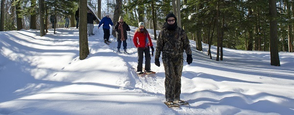 group  of cross-country skiers coming toward camera, on a snowy forest trail