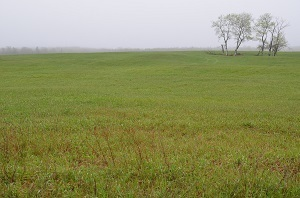 A sweeping vista of a Michigan grassland