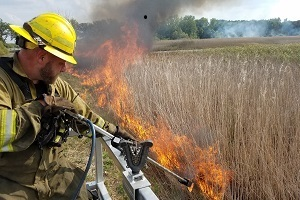 A DNR forestry fireman conducts a prescribed burn to treat invasive phragmites