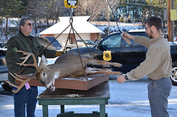 Showcasing the DNR: Continuing the fight against CWD