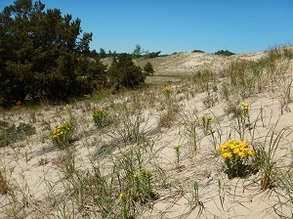 Another view of the sand dunes that are part of a 100-acre land acquisition at Ludington State Park