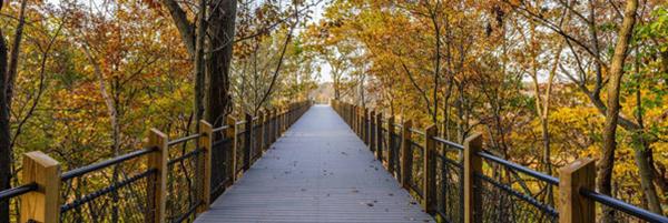 trail with a bridge