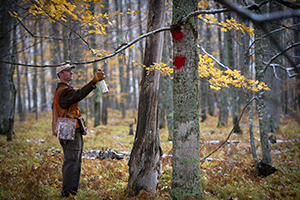 DNR forester marks a boundary for timber sale