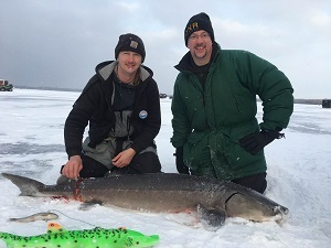 Two men in winter gear kneeling next to a lake sturgeon on a frozen lake