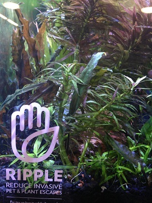 close-up view fish tank with a RIPPLE cling