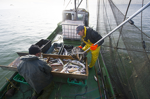 A commercial fishing operation is shown underway on the waters of Saginaw Bay.
