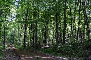 Forests green and quiet await visitors to Craig Lake State Park.