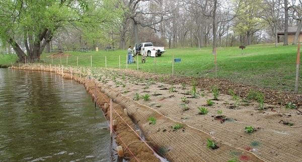 Natural shoreline planting - Michigan Natural Shoreline Partnership