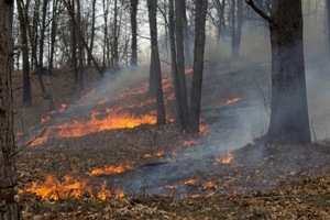 small areas of prescribed fire burning on the ground in a mature forest